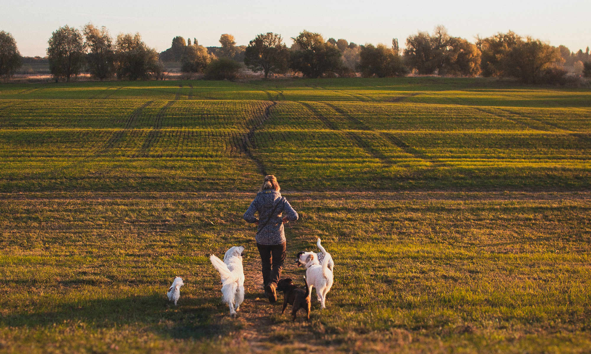 Dogwalking ein Hundespaziergang | Angebot von Niederrheinschnauzen