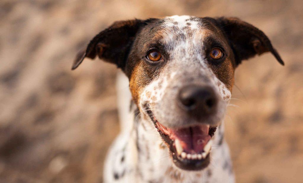 Niederrheinschnauzen - Hundetraining mit Anna Reddig